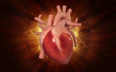 Heartof