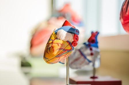 humanheart