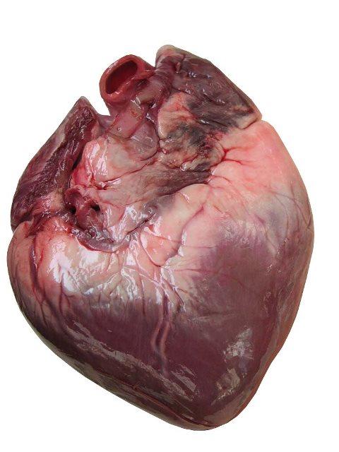 HUman-heart-1