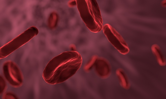 red-blood-cells-3188223_640