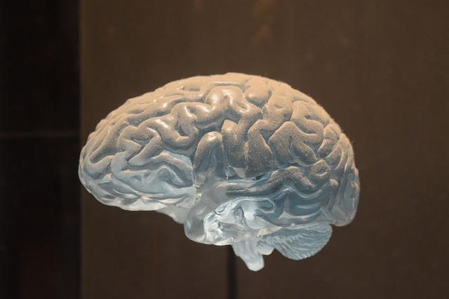 brain-3120178_640