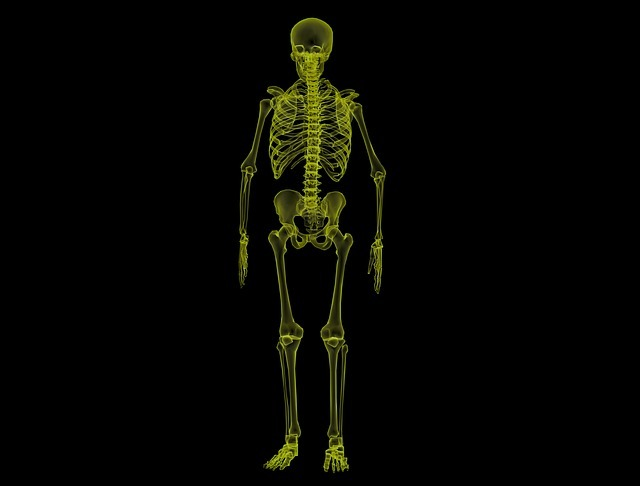 human-skeleton-1813086_640