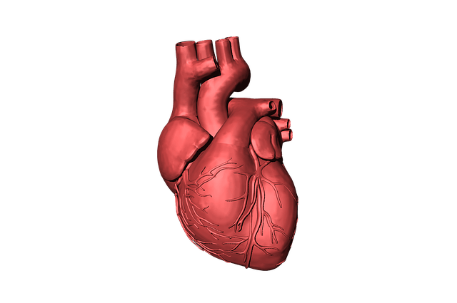 Ancora Heart enrols first patient in study of AccuCinch system