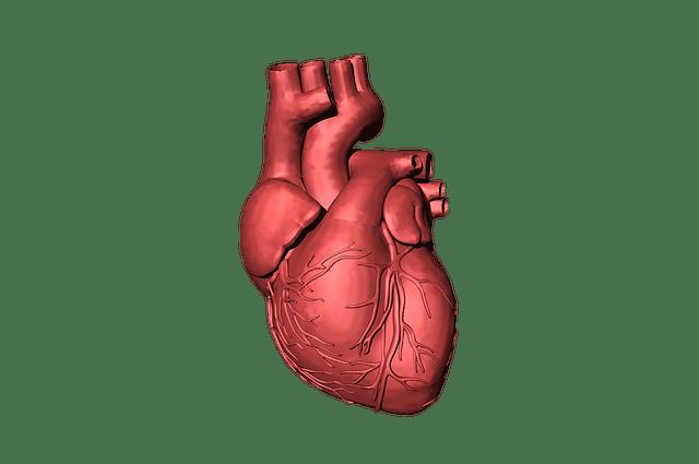 heart-1765298_640