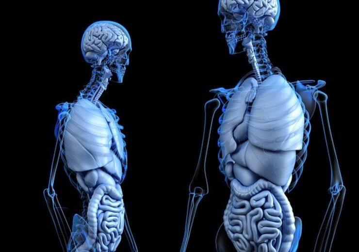anatomical-2261006_640