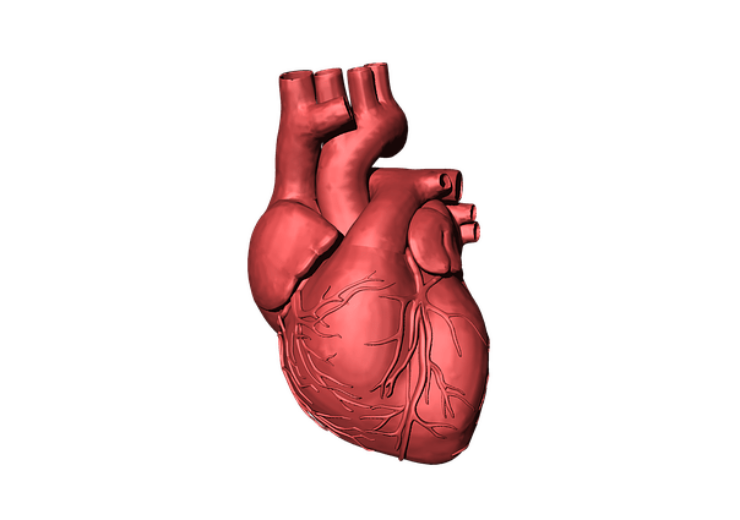 heart-1765298_640(2)