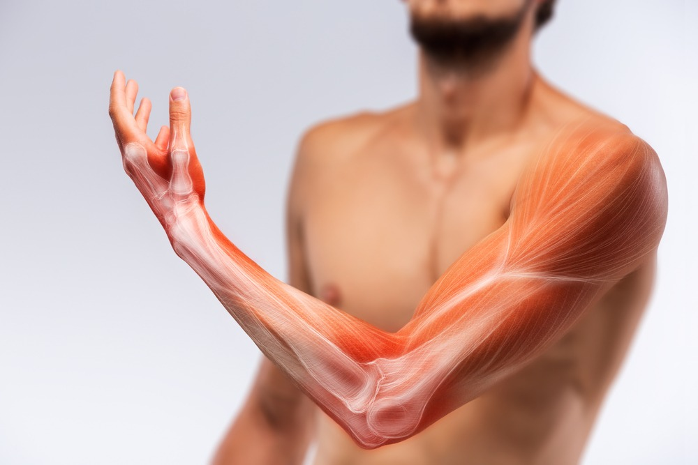 Bioengineered hybrid muscle fibre could be used to regenerate damaged muscle tissue