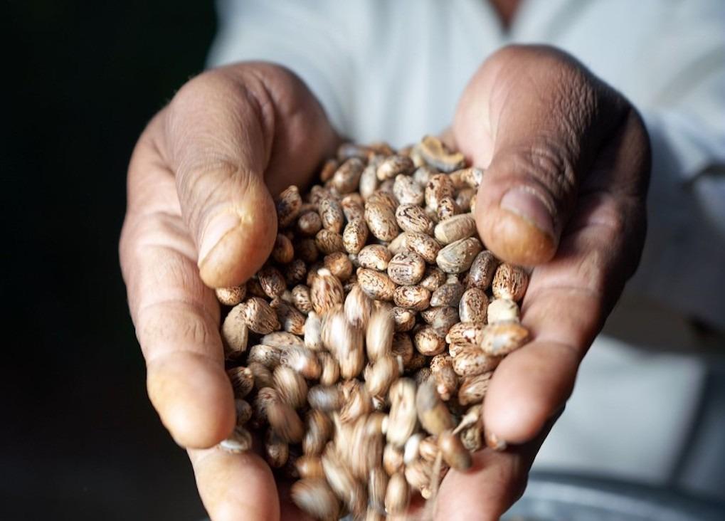 How Arkema is producing advanced bio-circular materials from a humble bean